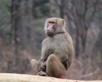 Monkkey