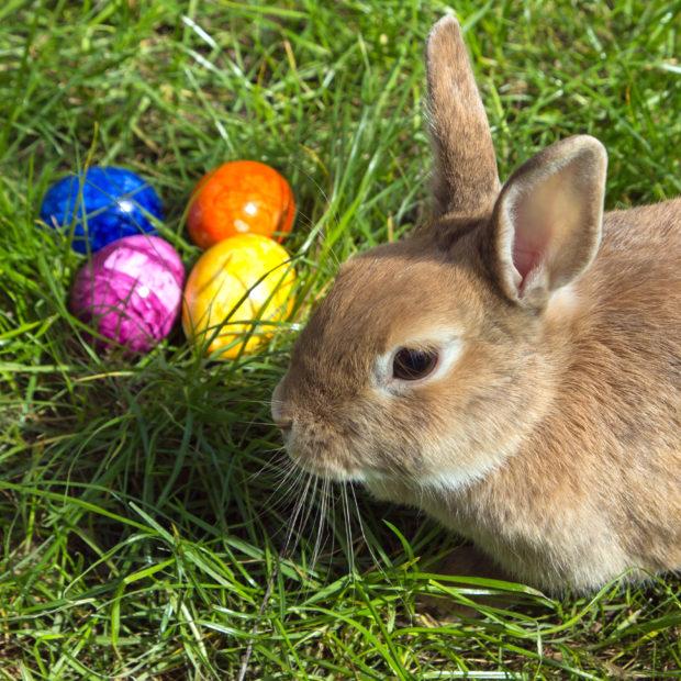 """El conillet """"Boti-Boti"""" i els seus Ous de Pascua"""